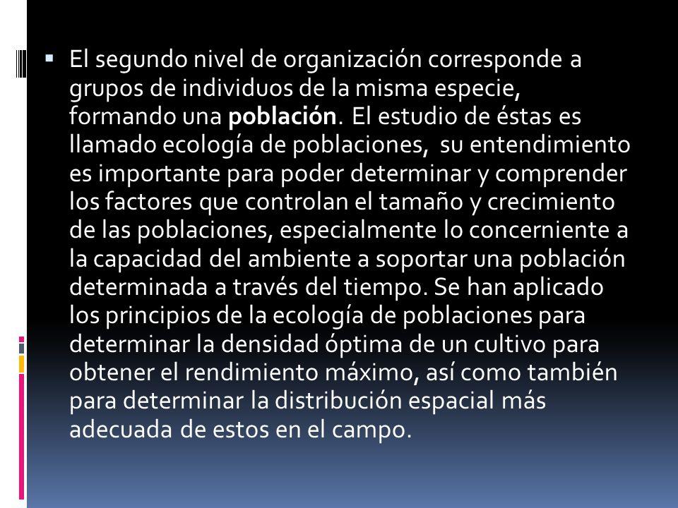 El segundo nivel de organización corresponde a grupos de individuos de la misma especie, formando una población. El estudio de éstas es llamado ecolog