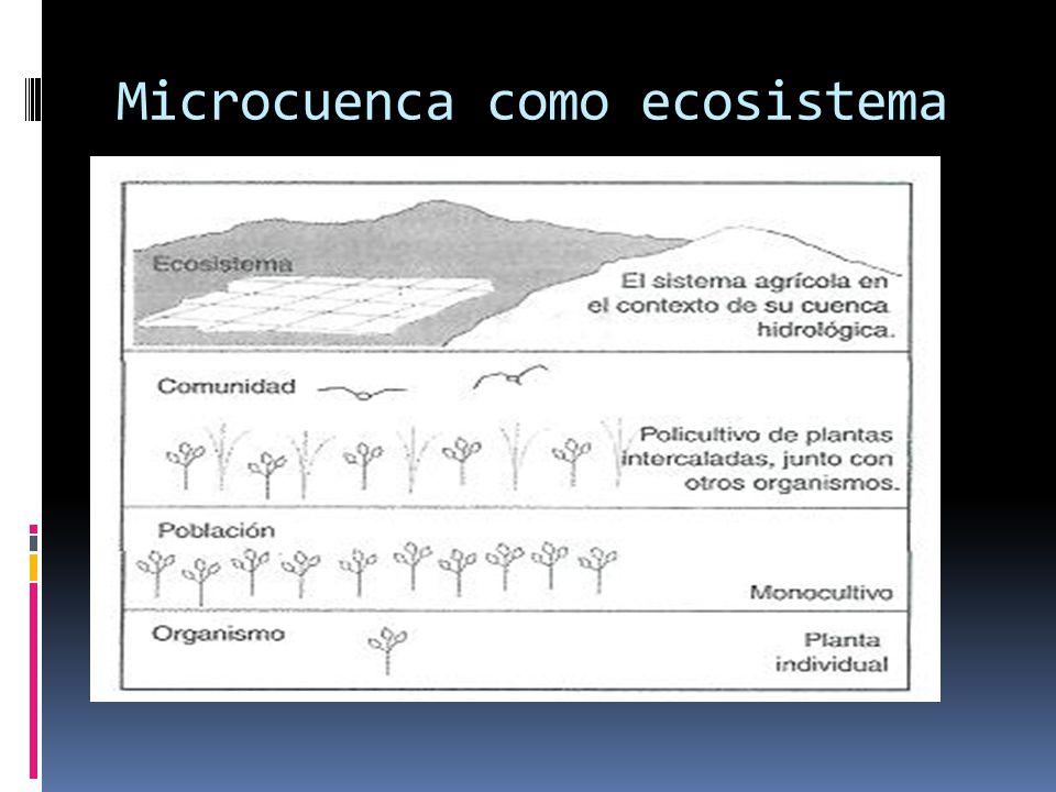 Microcuenca como ecosistema