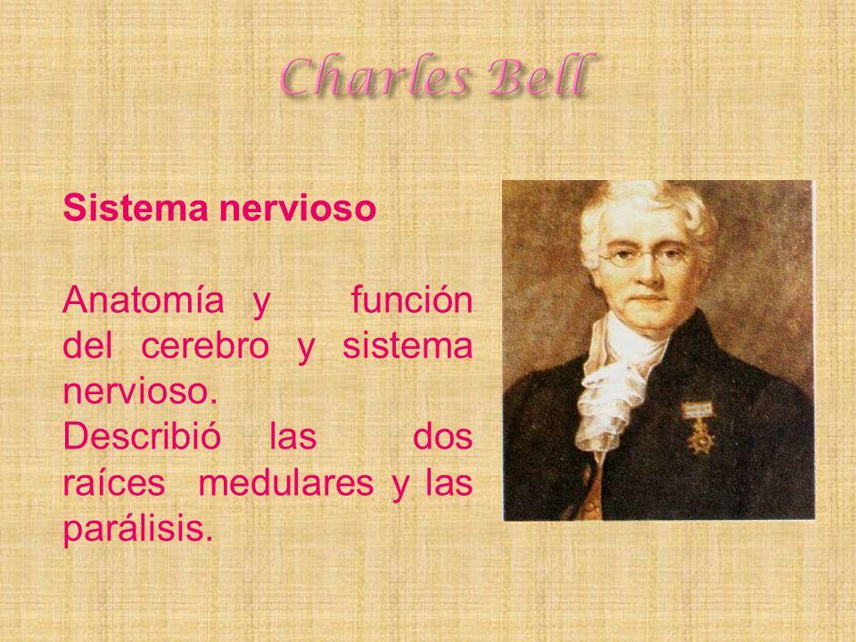 Sistema nervioso Anatomía y función del cerebro y sistema nervioso. Describió las dos raíces medulares y las parálisis.