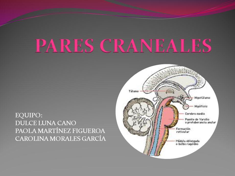 Examen neurológico: Pares craneales Esencial en el paciente neurológico.