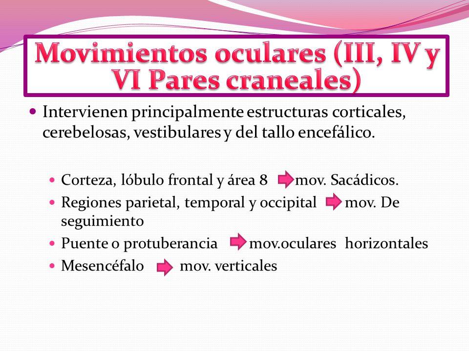 NERVIO VESTIBULAR La rama vestibular del VIII par craneal o nervio vestibulococlear, es responsable del equilibrio estático y cinético y nos da la posición global de la cabeza en relación con los diversos planos del espacio.