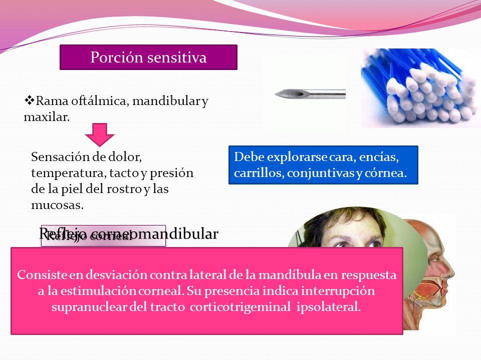 Porción sensitiva Rama oftálmica, mandibular y maxilar.