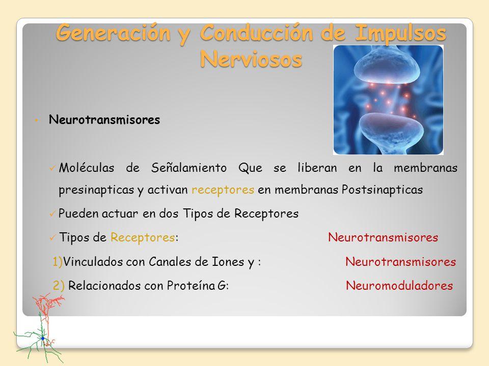 Generación y Conducción de Impulsos Nerviosos Neurotransmisores Moléculas de Señalamiento Que se liberan en la membranas presinapticas y activan recep