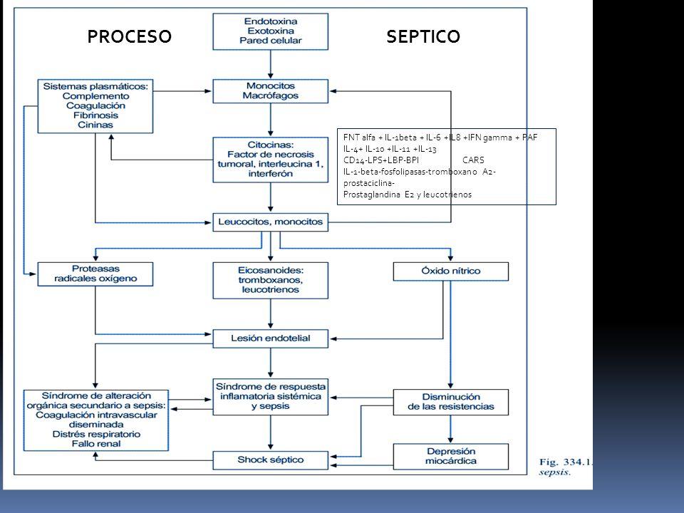 FN FNT alfa + IL-1beta + IL-6 +IL8 +IFN gamma + PAF IL-4+ IL-10 +IL-11 +IL-13 CD14-LPS+LBP-BPI CARS IL-1-beta-fosfolipasas-tromboxano A2- prostaciclina- Prostaglandina E2 y leucotrienos PROCESOSEPTICO