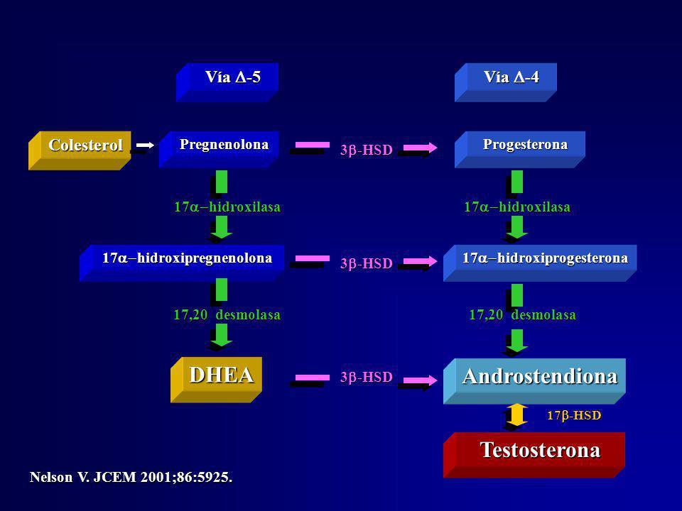 Vía -5 Vía -4 PregnenolonaProgesterona DHEA 17 hidroxipregnenolona Androstendiona 17 hidroxiprogesterona Colesterol 17 hidroxilasa 17,20 desmolasa 3 -