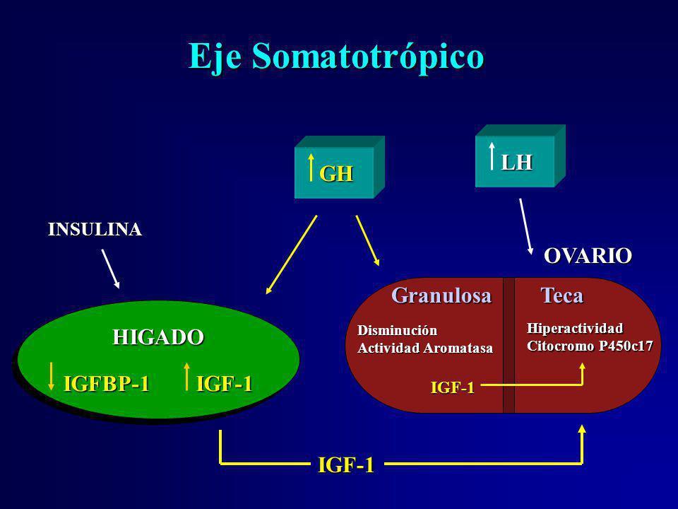 Eje Somatotrópico GH GH HIGADO IGFBP-1 IGF-1 HIGADO INSULINA OVARIO TecaGranulosa Hiperactividad Citocromo P450c17 IGF-1 Disminución Actividad Aromata