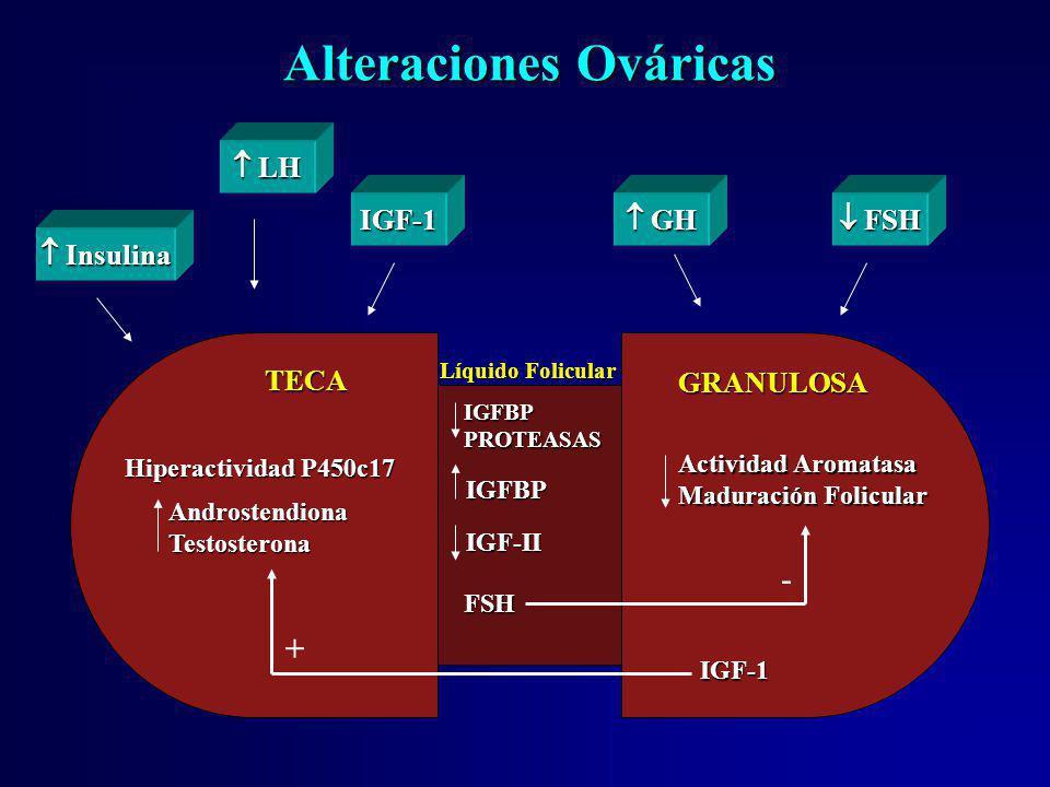 Alteraciones Ováricas IGFBPPROTEASAS IGFBP IGF-II FSH Hiperactividad P450c17 AndrostendionaTestosterona Actividad Aromatasa Maduración Folicular IGF-1
