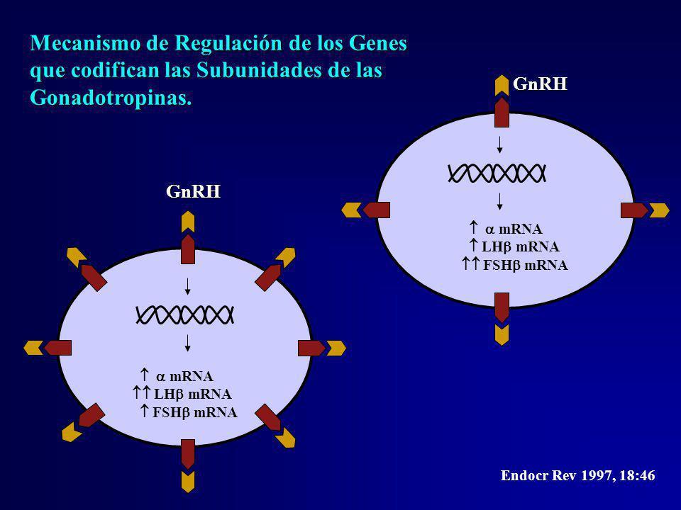 GnRH mRNA LH mRNA FSH mRNA GnRH mRNA LH mRNA FSH mRNA Endocr Rev 1997, 18:46 Mecanismo de Regulación de los Genes que codifican las Subunidades de las