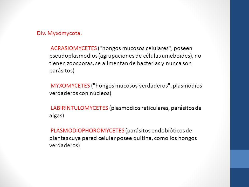 Div. Myxomycota. ACRASIOMYCETES (