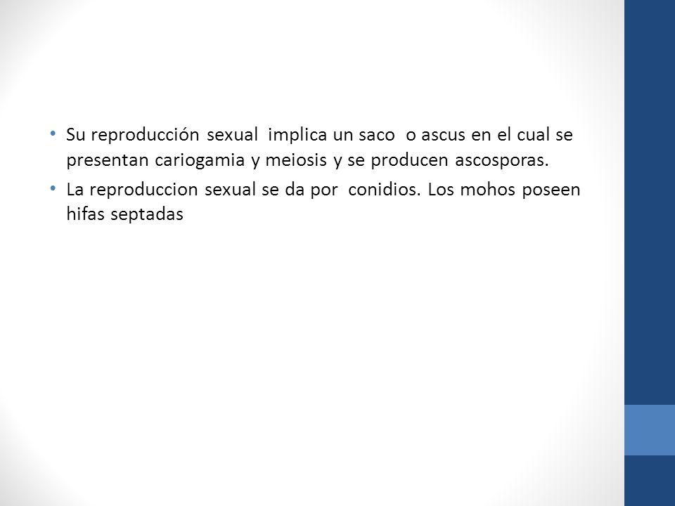 Su reproducción sexual implica un saco o ascus en el cual se presentan cariogamia y meiosis y se producen ascosporas. La reproduccion sexual se da por