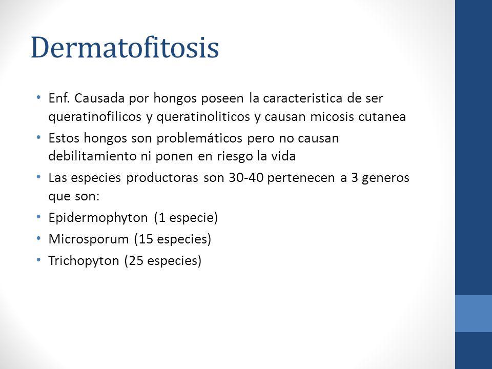 Dermatofitosis Enf. Causada por hongos poseen la caracteristica de ser queratinofilicos y queratinoliticos y causan micosis cutanea Estos hongos son p