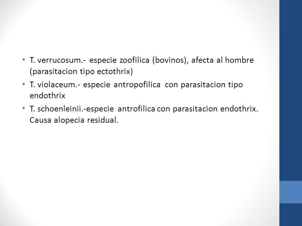 T. verrucosum.- especie zoofilica (bovinos), afecta al hombre (parasitacion tipo ectothrix) T. violaceum.- especie antropofilica con parasitacion tipo