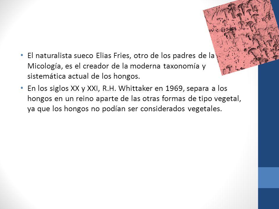 El naturalista sueco Elias Fries, otro de los padres de la Micología, es el creador de la moderna taxonomía y sistemática actual de los hongos. En los