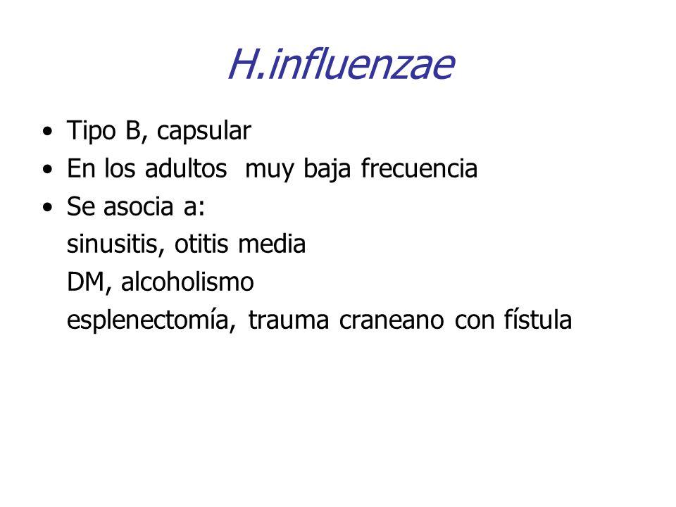 H.influenzae Tipo B, capsular En los adultos muy baja frecuencia Se asocia a: sinusitis, otitis media DM, alcoholismo esplenectomía, trauma craneano c