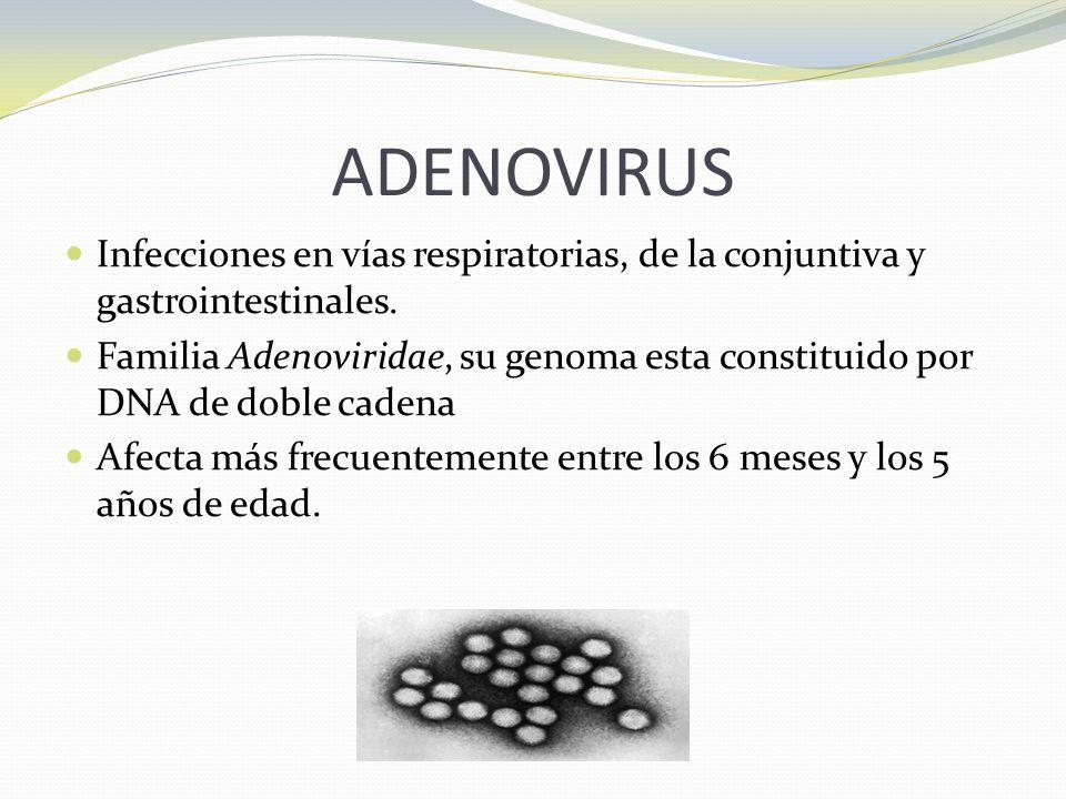 ADENOVIRUS Infecciones en vías respiratorias, de la conjuntiva y gastrointestinales. Familia Adenoviridae, su genoma esta constituido por DNA de doble
