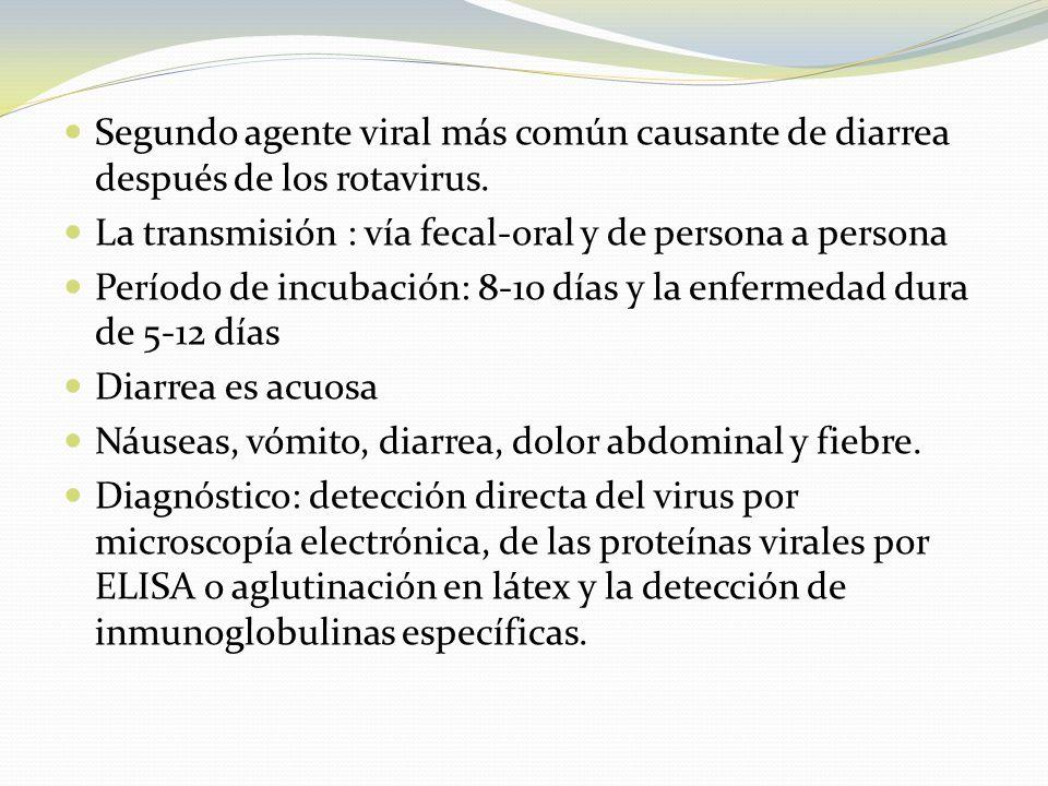Segundo agente viral más común causante de diarrea después de los rotavirus. La transmisión : vía fecal-oral y de persona a persona Período de incubac
