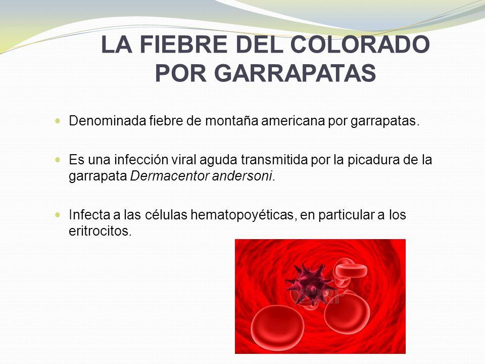 LA FIEBRE DEL COLORADO POR GARRAPATAS Denominada fiebre de montaña americana por garrapatas. Es una infección viral aguda transmitida por la picadura