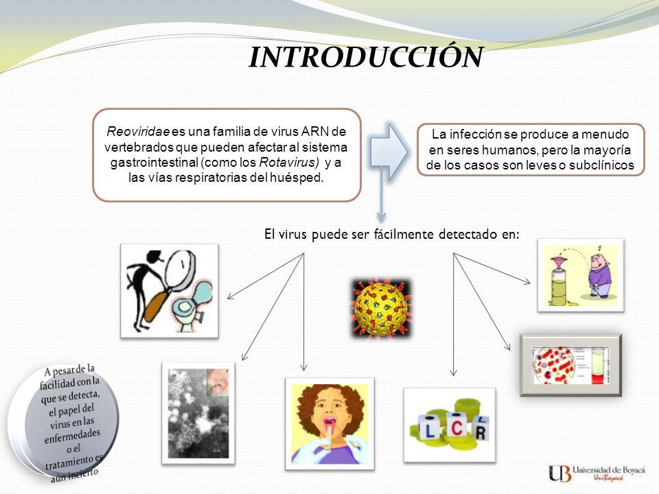 INTRODUCCIÓN Reoviridae es una familia de virus ARN de vertebrados que pueden afectar al sistema gastrointestinal (como los Rotavirus) y a las vías re