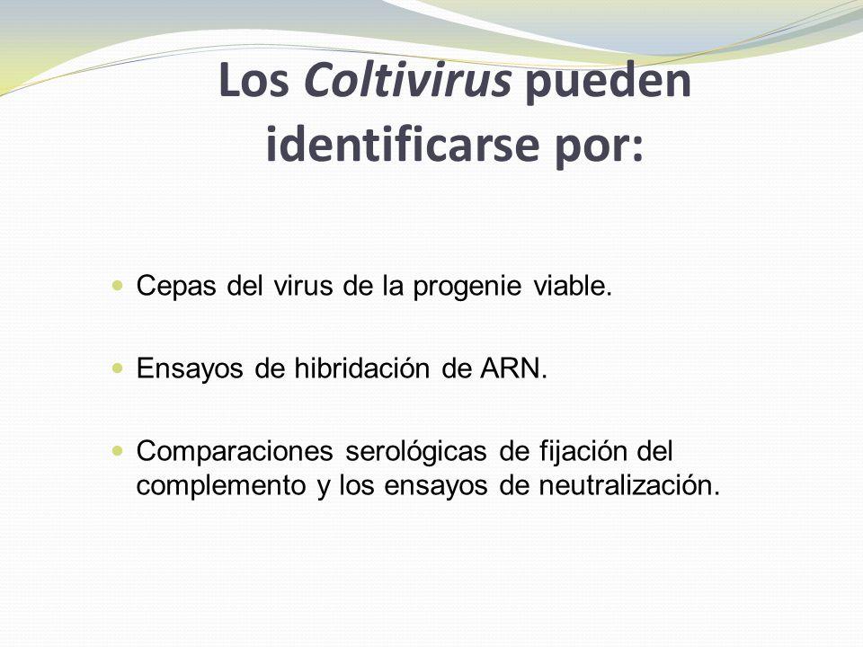 Los Coltivirus pueden identificarse por: Cepas del virus de la progenie viable. Ensayos de hibridación de ARN. Comparaciones serológicas de fijación d