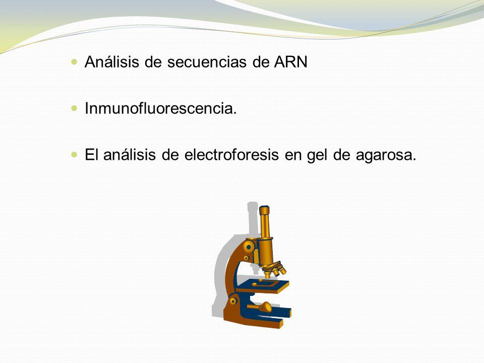 Análisis de secuencias de ARN Inmunofluorescencia. El análisis de electroforesis en gel de agarosa.