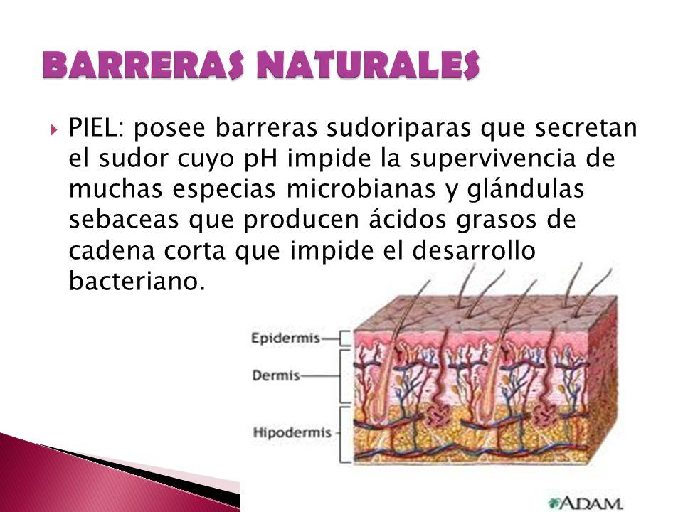 PIEL: posee barreras sudoriparas que secretan el sudor cuyo pH impide la supervivencia de muchas especias microbianas y glándulas sebaceas que produce