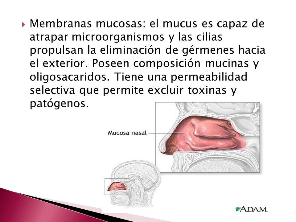 Membranas mucosas: el mucus es capaz de atrapar microorganismos y las cilias propulsan la eliminación de gérmenes hacia el exterior. Poseen composició