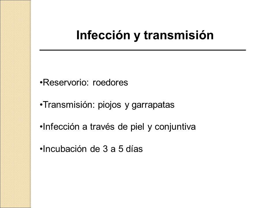 Infección y transmisión ______________________________________________________ Reservorio: roedores Transmisión: piojos y garrapatas Infección a travé
