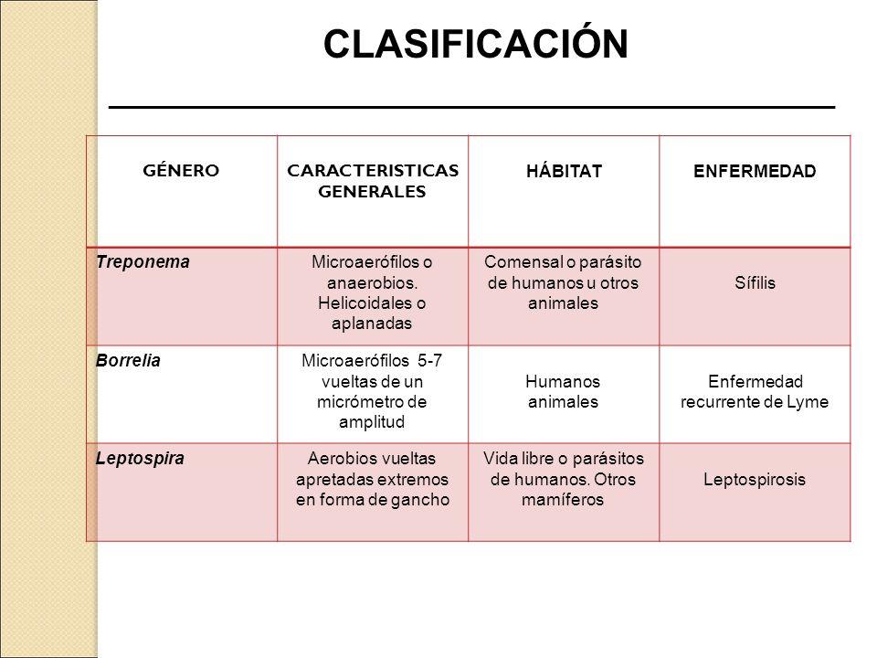 CLASIFICACIÓN ____________________________________________________________ GÉNEROCARACTERISTICAS GENERALES HÁBITATENFERMEDAD TreponemaMicroaerófilos o