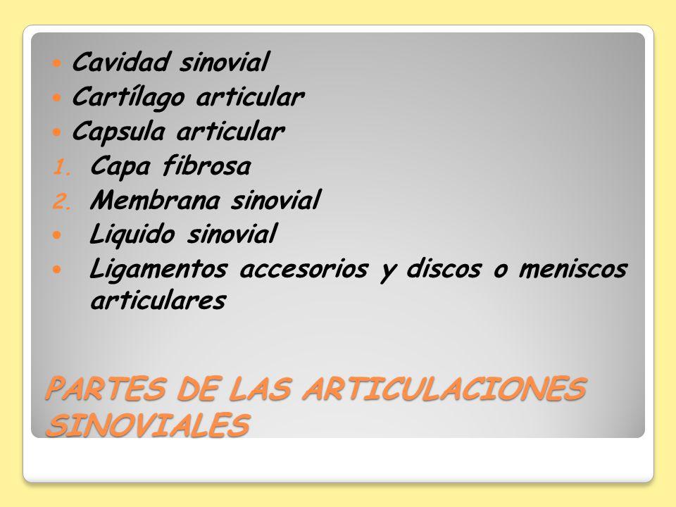 PARTES DE LAS ARTICULACIONES SINOVIALES Cavidad sinovial Cartílago articular Capsula articular 1. Capa fibrosa 2. Membrana sinovial Liquido sinovial L