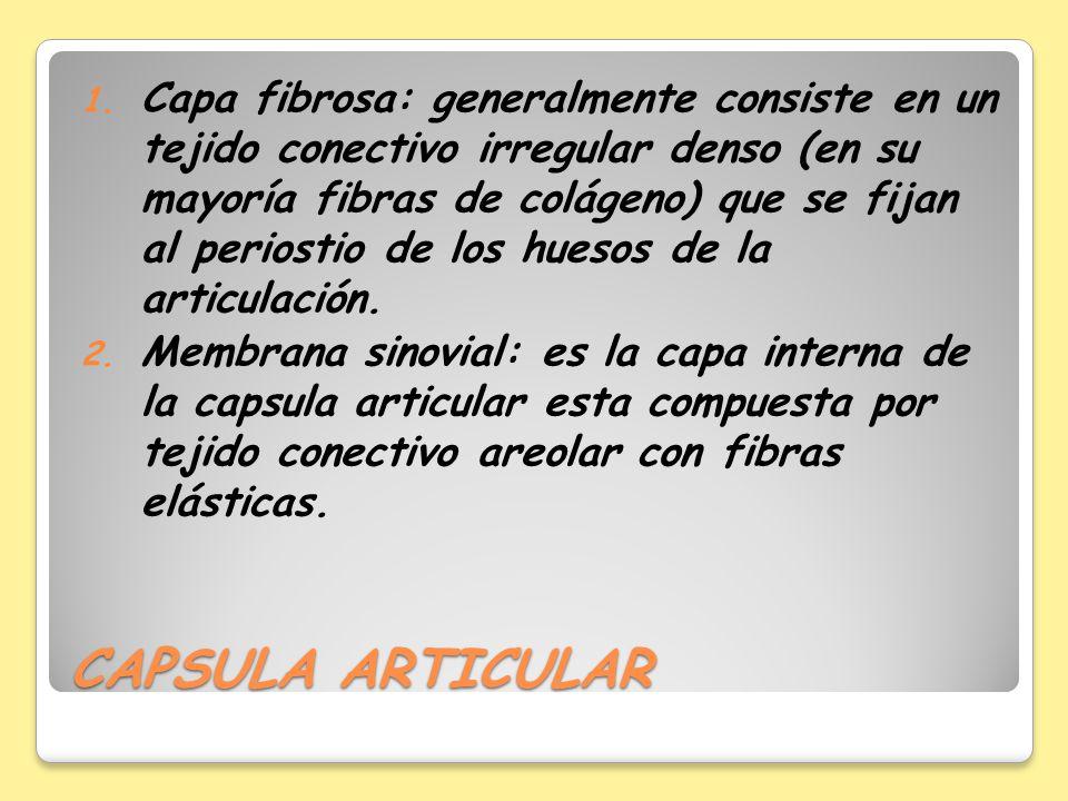 CAPSULA ARTICULAR 1. Capa fibrosa: generalmente consiste en un tejido conectivo irregular denso (en su mayoría fibras de colágeno) que se fijan al per