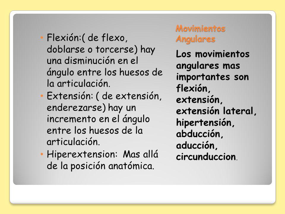 Movimientos Angulares Flexión:( de flexo, doblarse o torcerse) hay una disminución en el ángulo entre los huesos de la articulación. Extensión: ( de e