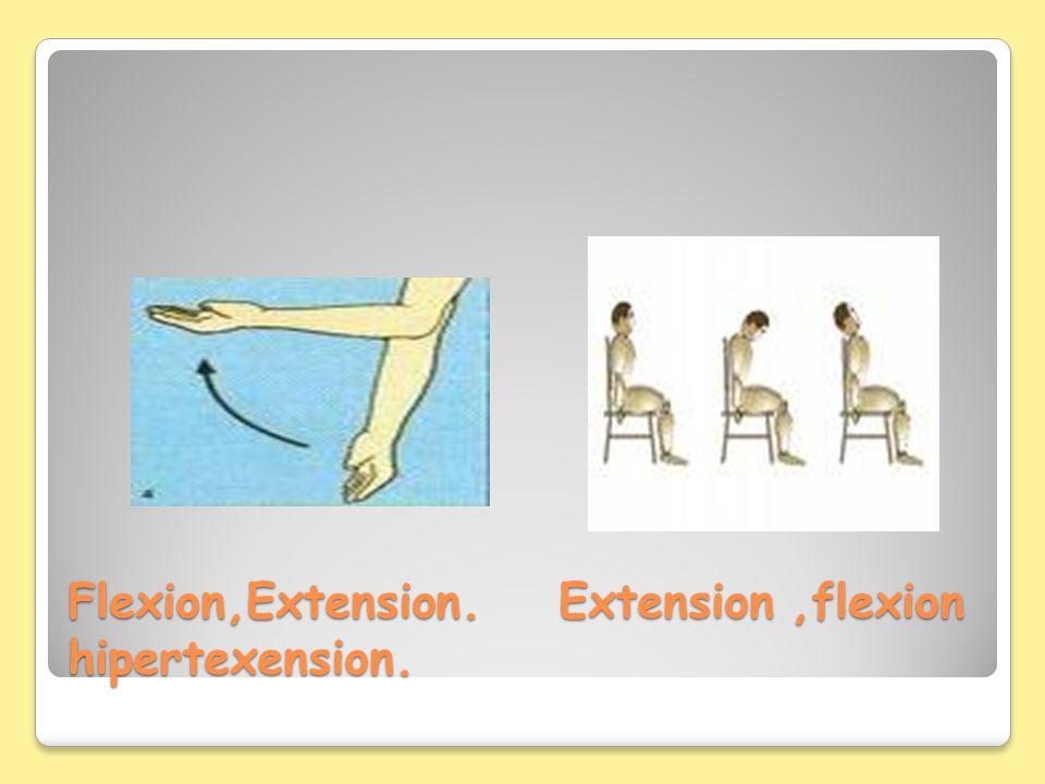Flexion,Extension. Extension,flexion hipertexension.