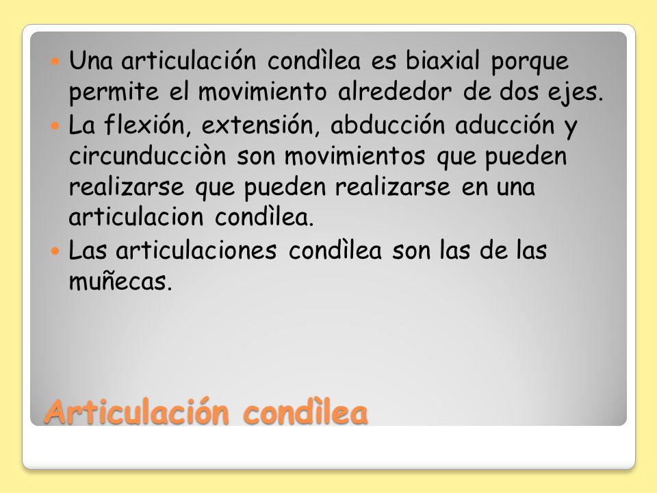 Articulación condìlea Una articulación condìlea es biaxial porque permite el movimiento alrededor de dos ejes. La flexión, extensión, abducción aducci
