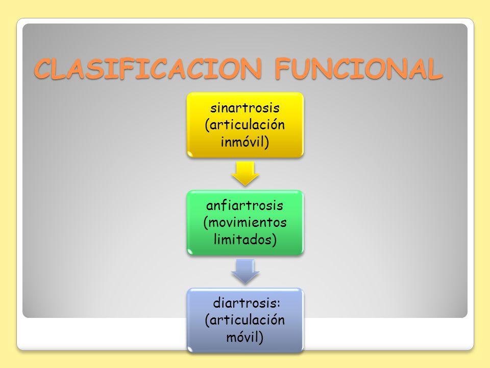 CLASIFICACION FUNCIONAL sinartrosis (articulación inmóvil) anfiartrosis (movimientos limitados) diartrosis: (articulación móvil)