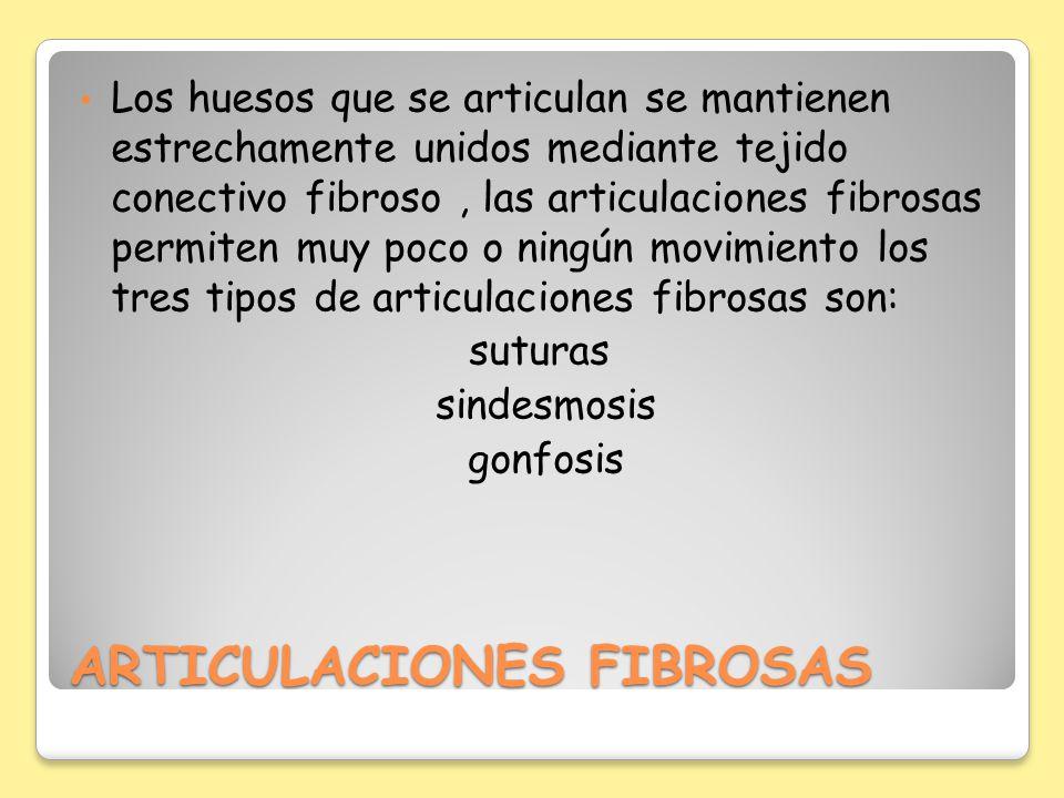 ARTICULACIONES FIBROSAS Los huesos que se articulan se mantienen estrechamente unidos mediante tejido conectivo fibroso, las articulaciones fibrosas p