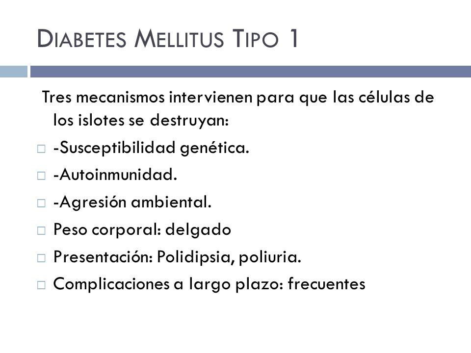 D IABETES M ELLITUS T IPO 1 Tres mecanismos intervienen para que las células de los islotes se destruyan: -Susceptibilidad genética.