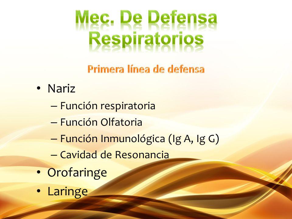 Nariz – Función respiratoria – Función Olfatoria – Función Inmunológica (Ig A, Ig G) – Cavidad de Resonancia Orofaringe Laringe