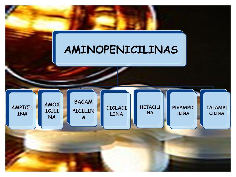 AMINOPENICILINAS AMPICIL INA AMOX ICILI NA BACAM PICILIN A CICLACI LINA HETACILI NA PIVAMPIC ILINA TALAMPI CILINA