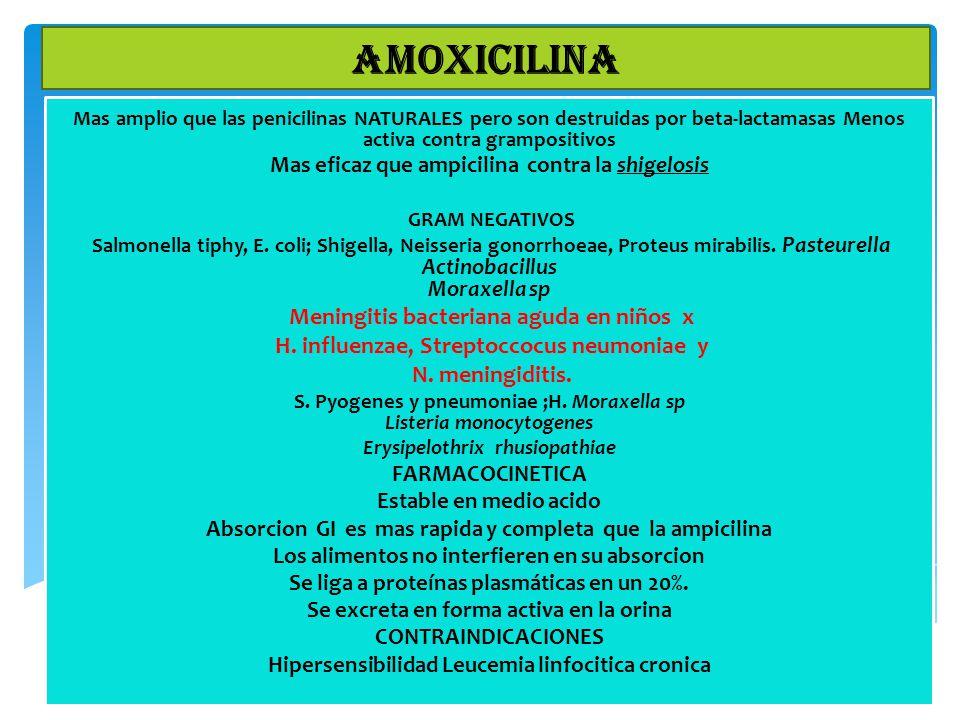 Mas amplio que las penicilinas NATURALES pero son destruidas por beta-lactamasas Menos activa contra grampositivos Mas eficaz que ampicilina contra la