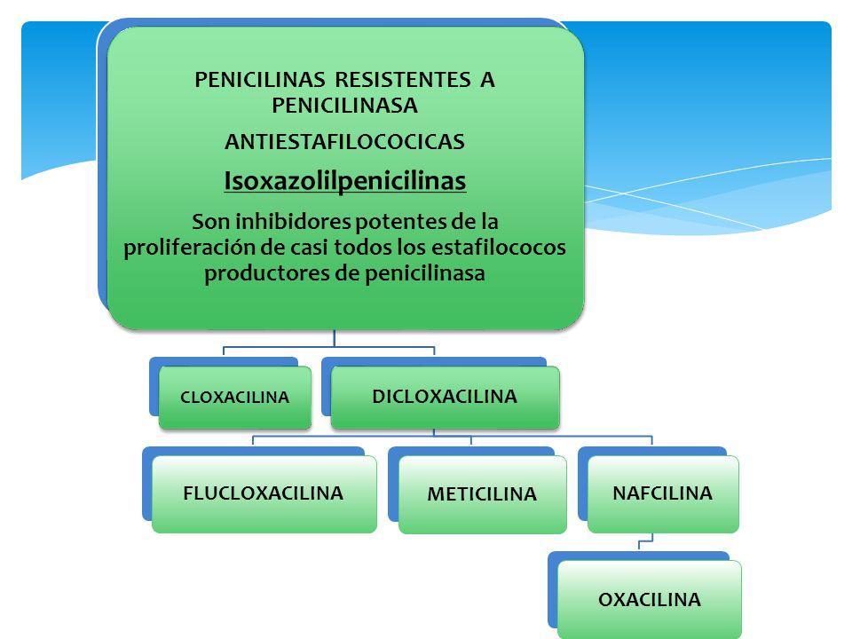 PENICILINAS ANTIESTAFILOCOCICAS Se absorben en forma rápida aunque incompleta por vía gastrointestinal (30-80%) Meticilina es inactivada por el ácido gástrico (parenteral) Mejor absorción con el estómago vacío Dicloxacilina y flucloxacilina son de mejor absorción y alcanzan concentraciones plasmáticas máximas en 30 -60 m Se unen a proteínas plasmáticas del 90-95%.