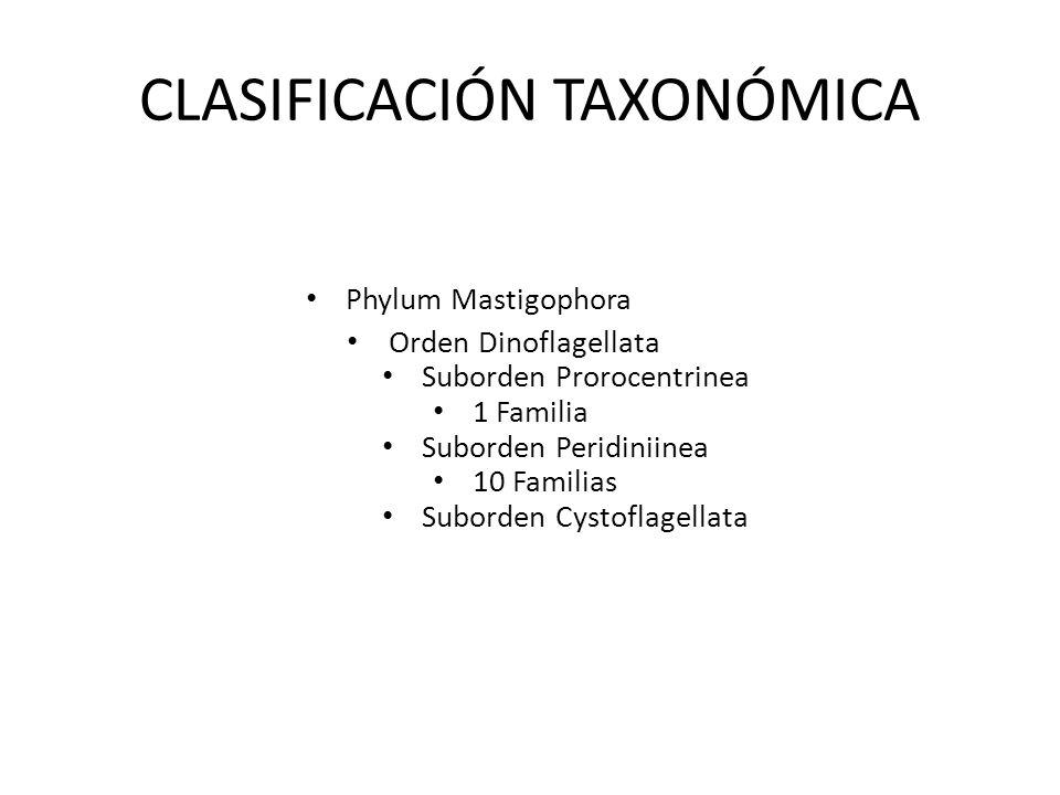CLASIFICACIÓN TAXONÓMICA Phylum Mastigophora Orden Dinoflagellata Suborden Prorocentrinea 1 Familia Suborden Peridiniinea 10 Familias Suborden Cystofl