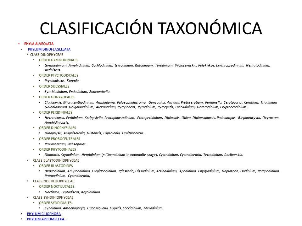 CLASIFICACIÓN TAXONÓMICA 4 Clases 11 Ordenes 550 Géneros 4000 especies Phyla Alveolata: Presencia de un sistema de membranas alveolares.