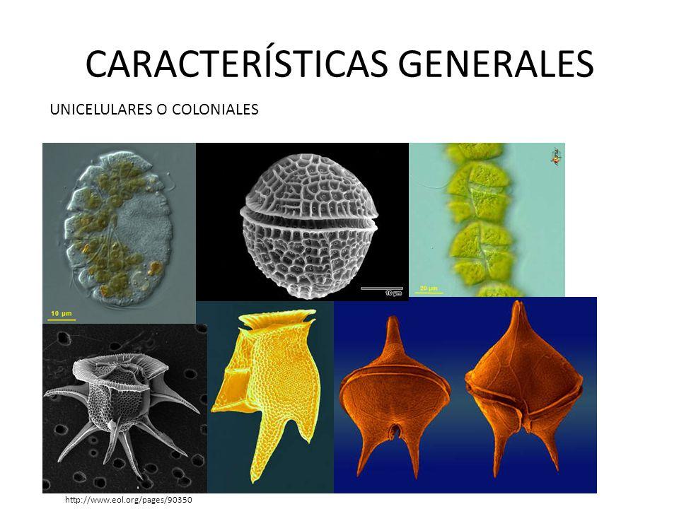 CARACTERÍSTICAS GENERALES Bioluminiscencia http://www.rincondelmisterio.com/el-extrano-fenomeno-de-las-olas-de-brillan/
