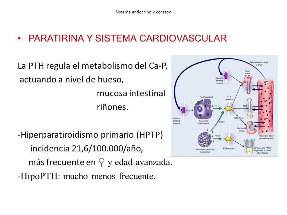Sistema endocrino y corazón PARATIRINA Y SISTEMA CARDIOVASCULAR La PTH regula el metabolismo del Ca-P, actuando a nivel de hueso, mucosa intestinal riñones.