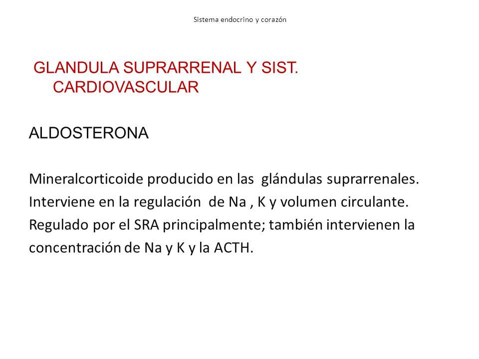 Sistema endocrino y corazón GLANDULA SUPRARRENAL Y SIST. CARDIOVASCULAR ALDOSTERONA Mineralcorticoide producido en las glándulas suprarrenales. Interv