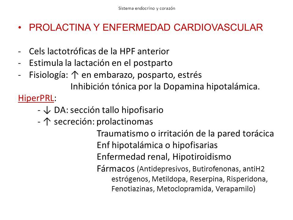 Sistema endocrino y corazón PROLACTINA Y ENFERMEDAD CARDIOVASCULAR -Cels lactotróficas de la HPF anterior -Estimula la lactación en el postparto -Fisiología: en embarazo, posparto, estrés Inhibición tónica por la Dopamina hipotalámica.