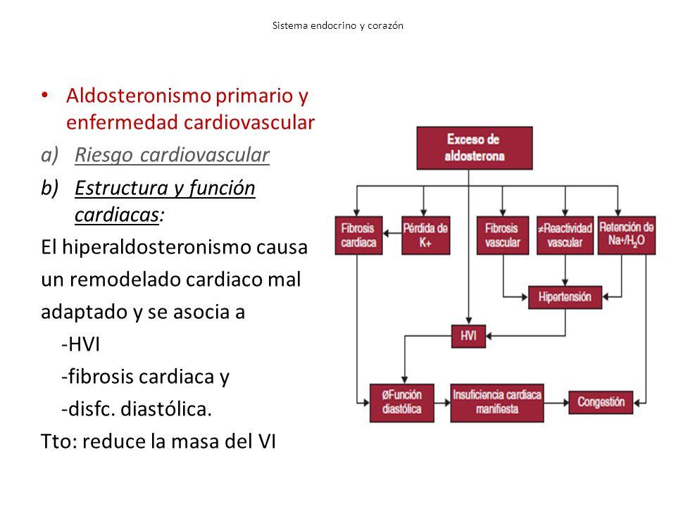 Sistema endocrino y corazón Aldosteronismo primario y enfermedad cardiovascular a)Riesgo cardiovascular b)Estructura y función cardiacas: El hiperaldosteronismo causa un remodelado cardiaco mal adaptado y se asocia a -HVI -fibrosis cardiaca y -disfc.