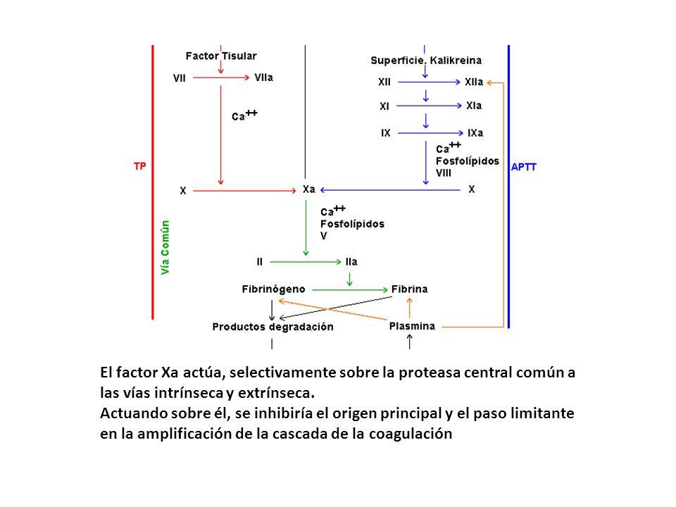 El factor Xa actúa, selectivamente sobre la proteasa central común a las vías intrínseca y extrínseca. Actuando sobre él, se inhibiría el origen princ