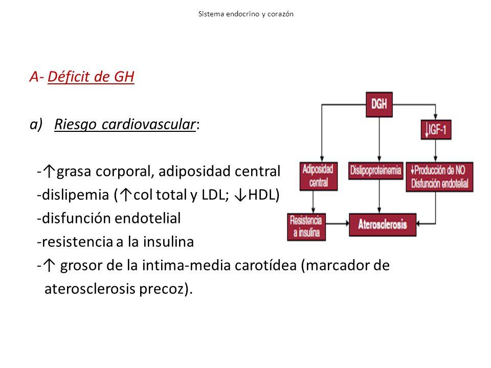 Sistema endocrino y corazón A- Déficit de GH a)Riesgo cardiovascular: -grasa corporal, adiposidad central -dislipemia (col total y LDL; HDL) -disfunci