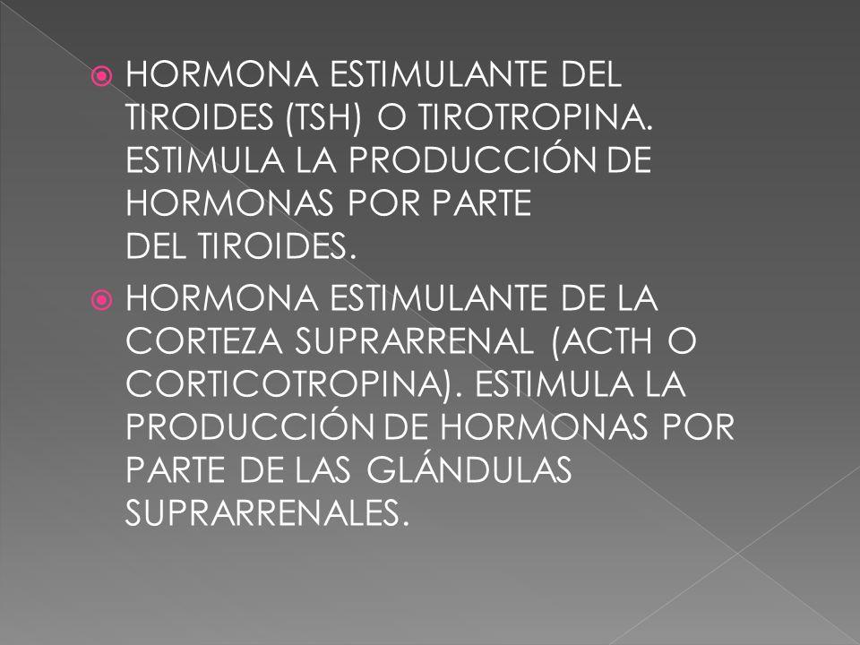 HORMONA ESTIMULANTE DEL TIROIDES (TSH) O TIROTROPINA. ESTIMULA LA PRODUCCIÓN DE HORMONAS POR PARTE DEL TIROIDES. HORMONA ESTIMULANTE DE LA CORTEZA SUP